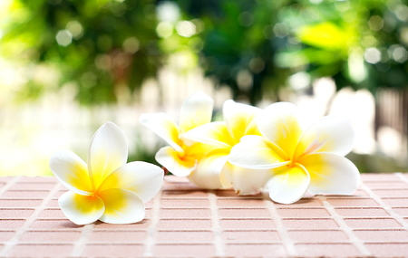 Blooming white Plumeria or Frangipani flowers on the brick floor with blurred green bokeh background. Select focus on front flower.
