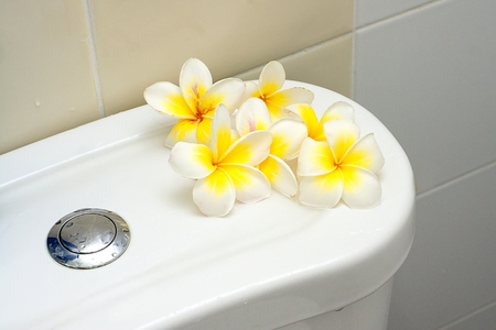 Blooming white Plumeria or Frangipani flowers in bathroom Stock Photo