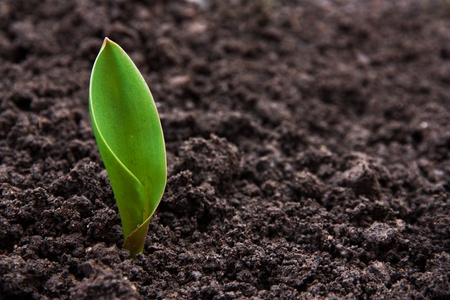 cultivate: Little flower seedling in the ground