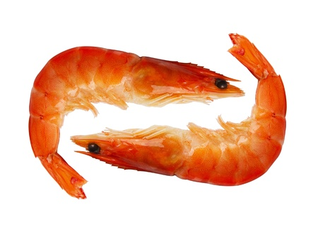 two shrimp isolated on white background photo