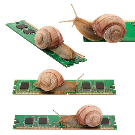 Snail on memory isolated on a white background photo