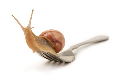 Snail on a fork sitting isolated on a white background Stock Photo - 9818843