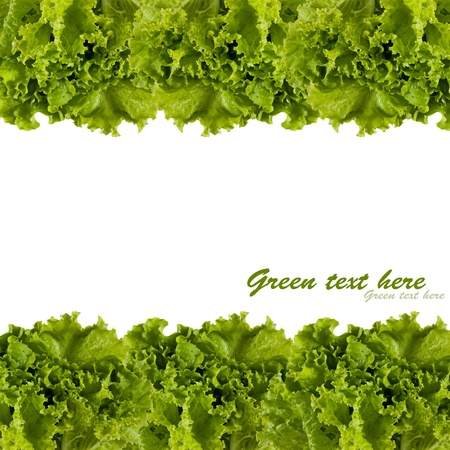 lettuce: frame of the green cabbage leaves
