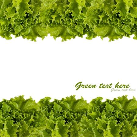 lechuga: marco de las hojas de repollo verde