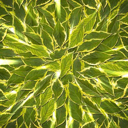 venation: background of bright green leaves Stock Photo