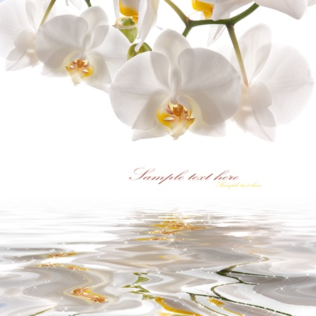 orchid branch: postcard. white orchids on the water
