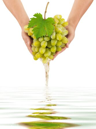 White grapes are in the hands of pouring wine photo