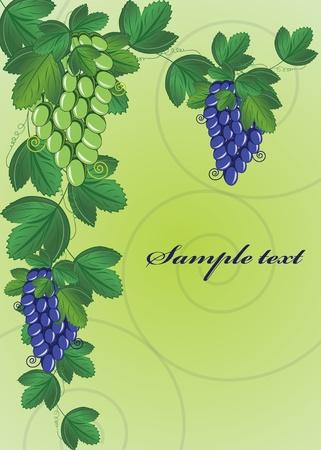 vine backgroundeps10 Vector