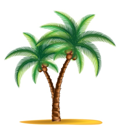 fronds: tropical palm tree standing on a small islandvector Illustration