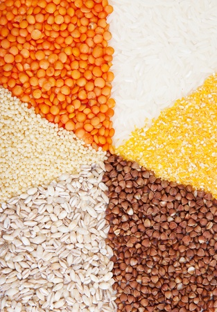 circle with segments from the different types of grain. photo