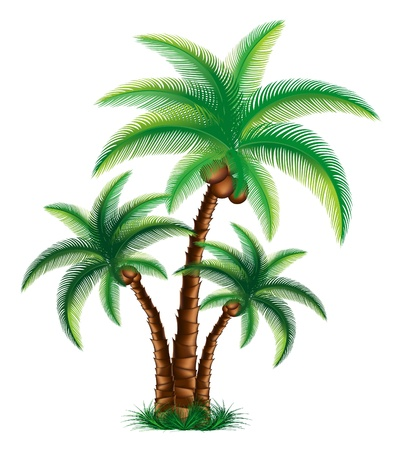 frond: Tropical palm trees are on grass