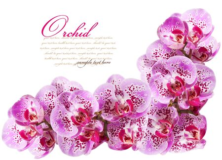 Orchid flowers photo