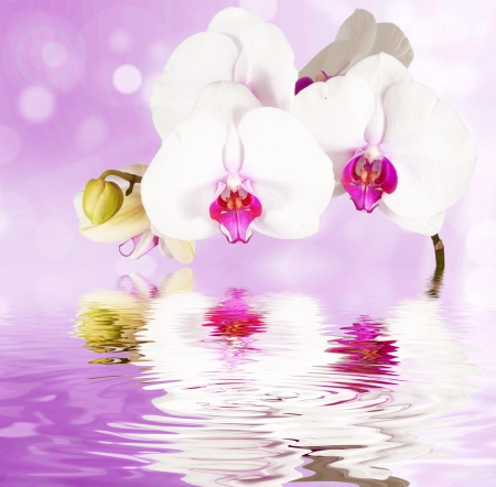 flora: postcard  orchids on the water