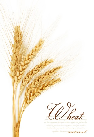 corn flour: Ears of wheat  isolated on a white background Stock Photo