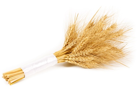 Bunch of wheat ears isolated on white background 免版税图像