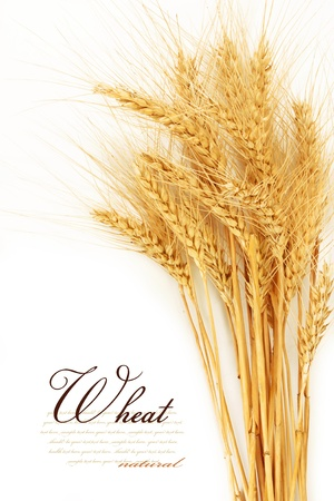Ears of wheat  isolated on a white background Archivio Fotografico