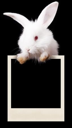 marco blanco y negro: Conejo con una fotograf�a Foto de archivo