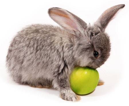 rabbit with apple isolated on white background photo