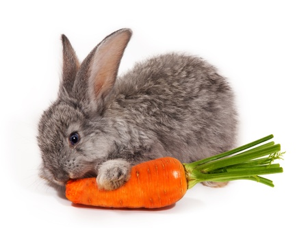 cony: Rabbit with carrot isolated on white background Stock Photo