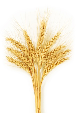 Ears of wheat. isolated on a white background photo