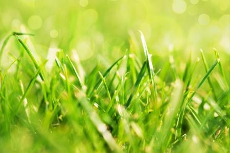 crecimiento planta: campo de hierba verde