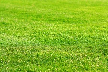 sod: background of green grass Stock Photo