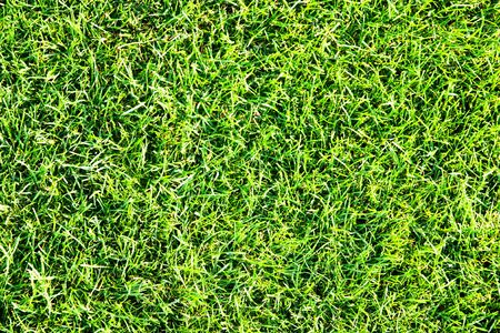 sod: background of green grass. texture Stock Photo