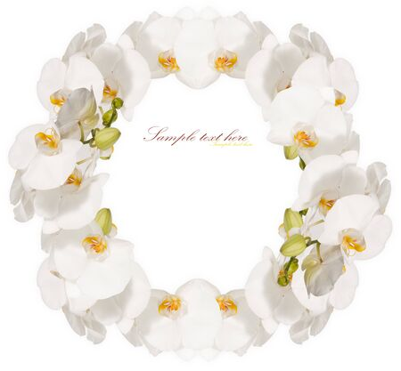 white orchid: The frame of the beautiful white orchids isolated on a white background