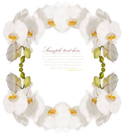 The frame of the beautiful white orchids isolated on a white background