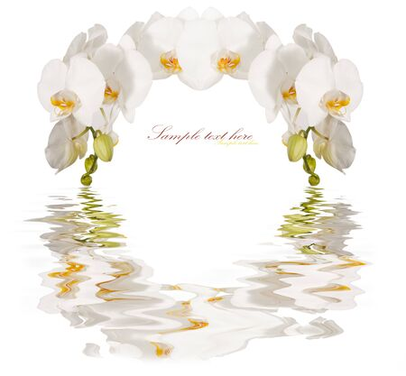 The frame of the beautiful white orchids isolated on a white background photo