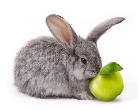 rabbit with apple isolated on white background Reklamní fotografie