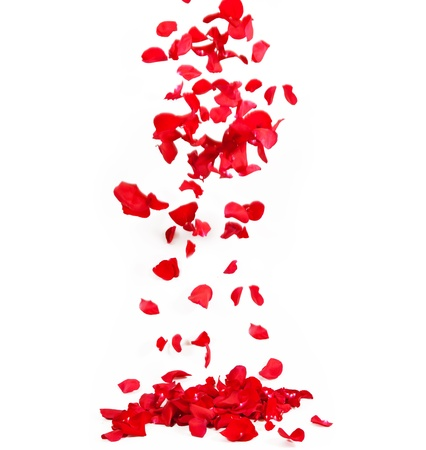 falling in love: Falling petals of roses