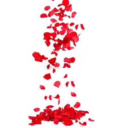 falling in love: Falling petals of roses