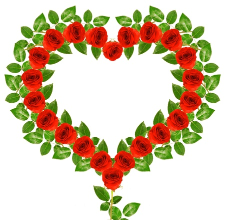 Red roses in heart shape isolated on white background photo