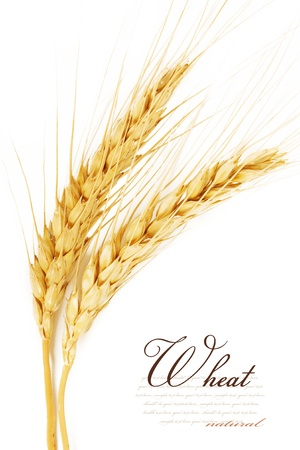 corn flour: Ears of wheat. isolated on a white background
