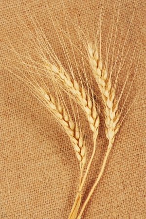 Ears of wheat on sacking photo