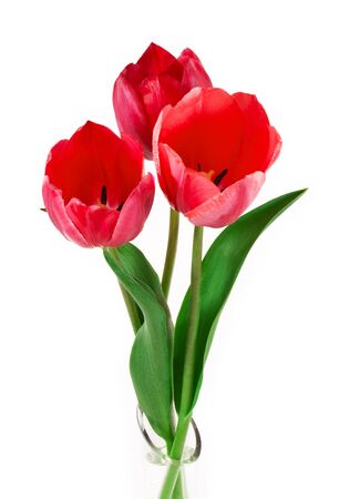tulips in vase: Beautiful bouquet of tulips isolated on white background Stock Photo