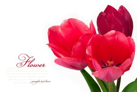matherday: Beautiful bouquet of tulips isolated on white background Stock Photo