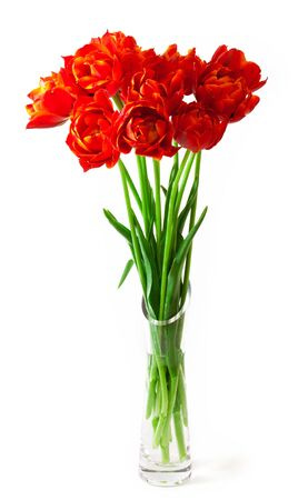 matherday: Beautiful bouquet of tulips in a vase. isolated on white background Stock Photo
