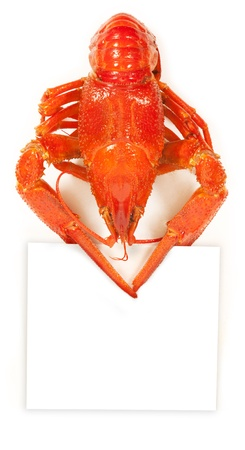 cancers: Crayfish with a sheet in claws. isolated on white background Stock Photo