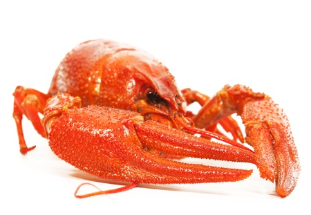 cancers: Boiled crawfish close-up. isolated on white background Stock Photo