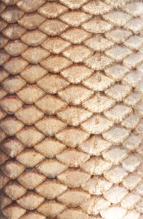 texture of fish scales close-up photo