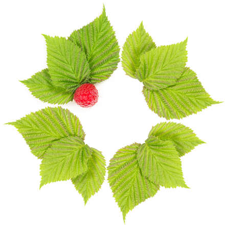 Frame from leaves of raspberry photo