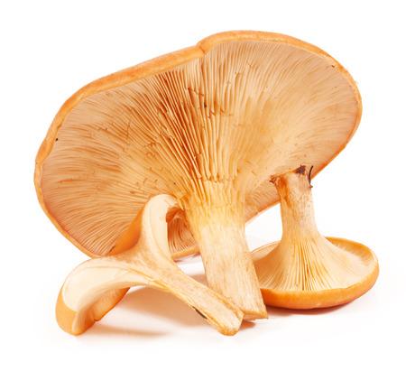 agaricus: mushroom isolated on white background Stock Photo