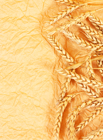 spikelets of wheat on a crumpled paper photo