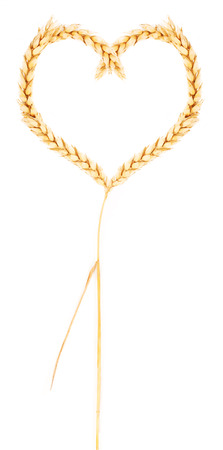 spikelets: Spikelets of wheat in the form of heart Stock Photo