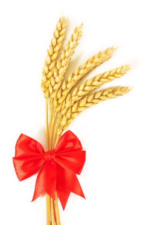 cereal plant: Spikelets of wheat. isolated on white background Stock Photo