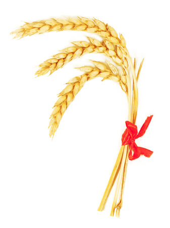 spikelets: Spikelets of wheat. isolated on white background Stock Photo