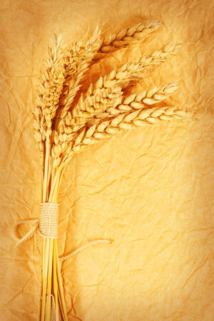 spikelets: spikelets of wheat on a crumpled paper