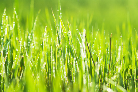 Background of green grass with drops photo